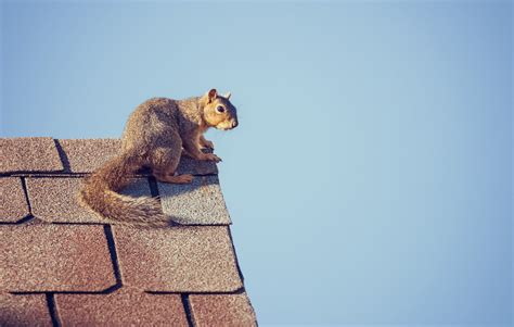 How to Keep Rodents From Entering Your Home - Selective