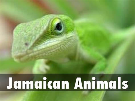 Jamaican Animals by jxjerry