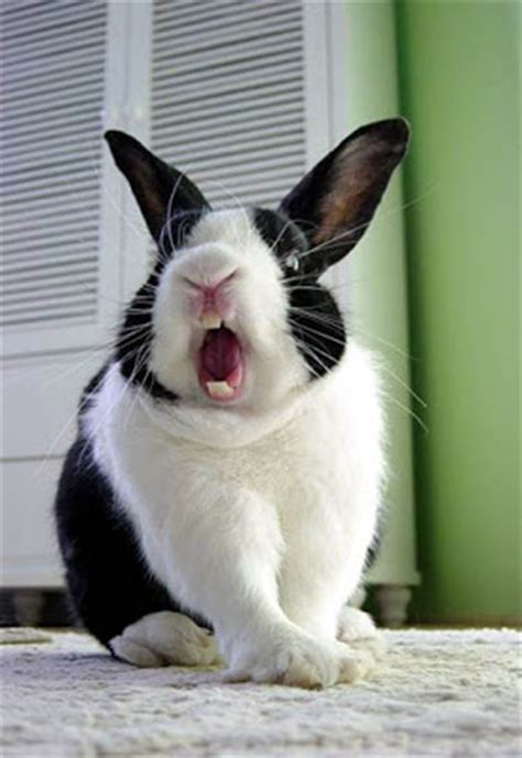 Funny Rabbits   New and Fresh Photos-Images   Funny And
